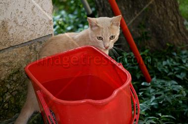 Cat up a bucket with water